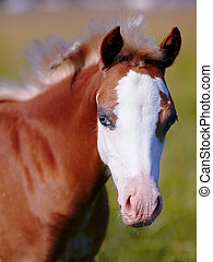 Foal on a meadow. The horse is grazed. Horse on a pasture.