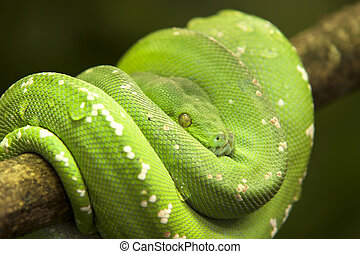 portrait of a green snake