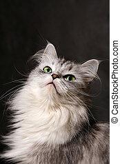 Portrait of a grey cat