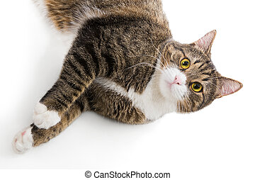 Portrait of a grey striped cat