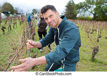 portrait of a happy male worker in vineyard