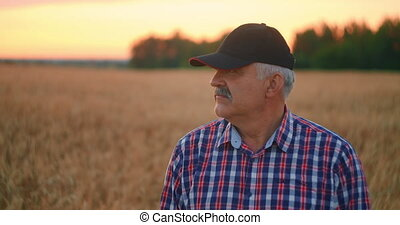 Portrait of a happy Senior adult farmer in a cap in a field of grain looking at the sunset. Wheat field of cereals at sunset. Slow motion
