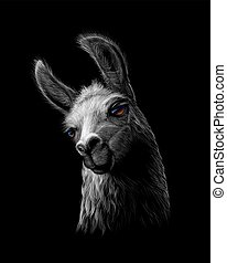 Portrait of a head of a llama on a black background. Vector ...