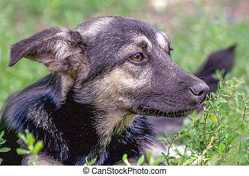 Portrait of a homeless dog mongrels