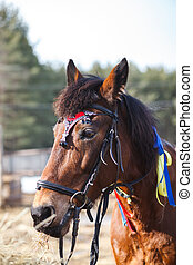 Portrait of a horse decorated with colorful ribbons for a festive performance on the parade ground