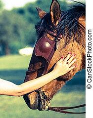 Lady rubbing a horse