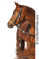 Portrait of a horse of brown color.