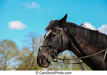 portrait of a horse thoroughbred English