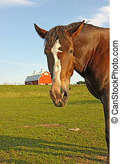 Portrait of a horse with a barn in the background