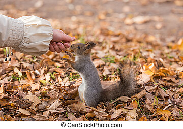 portrait of a hungry squirrel