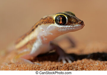 Kalahari ground gecko - Portrait of a Kalahari ground gecko...