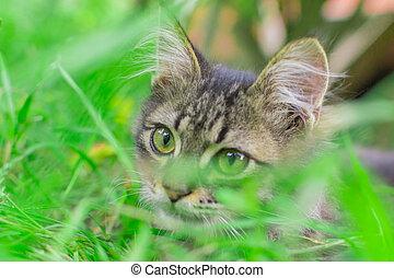 portrait of a kitten in the grass