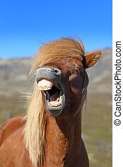 Portrait of a laughing horse