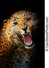 Leopard - Portrait of a Leopard