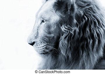 Portrait of a lion close-up
