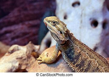 portrait of a lizard closeup