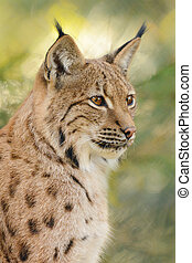 Portrait of a lynx with greenish background