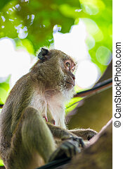 portrait of a monkey looking away on a background of green foliage