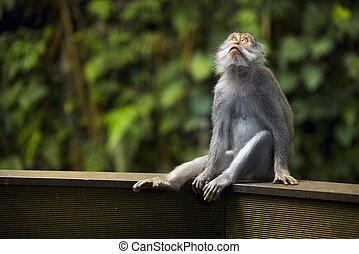 Portrait of a Monkey.