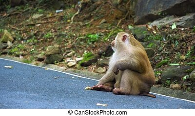 portrait of a monkey sitting on a road in the jungle.
