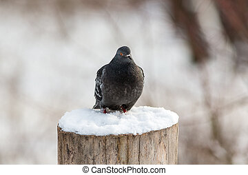pigeon sitting on a tree stump