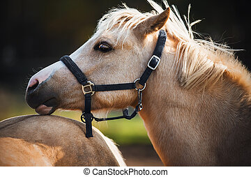 Portrait of a playful, beautiful horse of a palomino race, which gently laid its head on the croup of another horse on a sunny summer day.