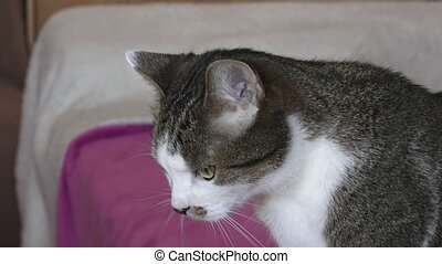 Portrait of a pretty cat is sitting on a sofa