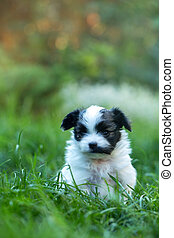 Portrait of a puppy in the grass