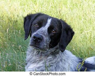 Portrait of a sad dog