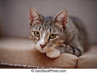 Portrait of a sad thoughtful striped cat.