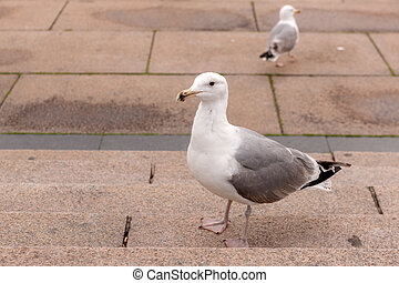 seagull on the steps