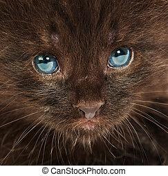 Portrait of a small kitten ...