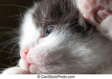 Portrait of a small kitten