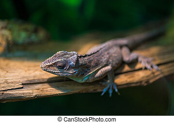 Portrait of a small lizard on a tree branch
