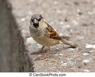 sparrow on a stone