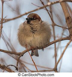 sparrow on a tree branch closeup