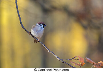 sparrow on a tree branch in autumn