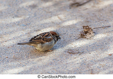 sparrow on the road