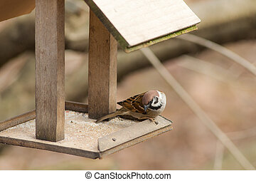 sparrow sitting on a wooden trough
