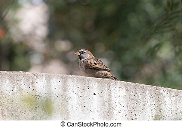 sparrow sitting on the concrete fence