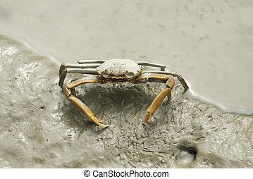 Portrait of a Spider Crab