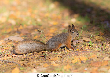 squirrel on a sunny autumn day