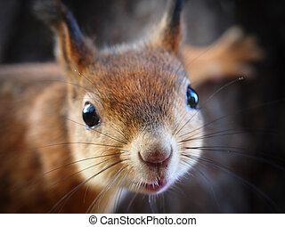 Portrait of a Squirrel