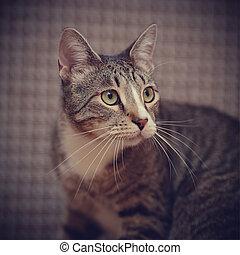 Portrait of a striped cat