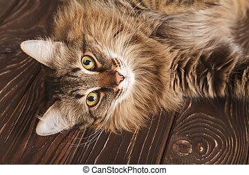 Portrait of a striped fluffy cat. Grey striped cute cat lying on wooden boards, cat muzzle close-up