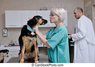 veterinarian and assistant in a small animal clinic -...
