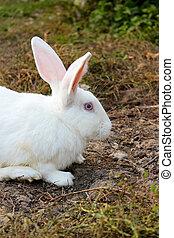 portrait of a white rabbit