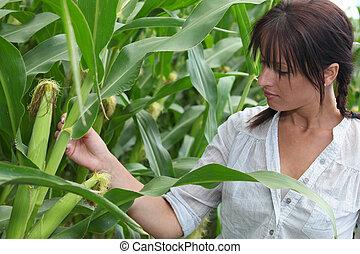 portrait of a woman in corn field