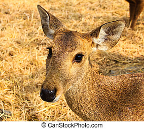 Portrait of a young deer.