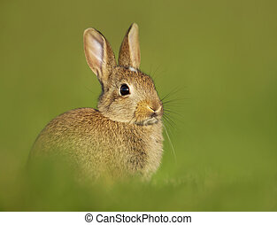 Portrait of a young little rabbit in the meadow